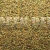 Донник желтый (Melilotus officinalis Desr) - Семена