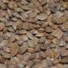 Эспарцет песчаный, (посевной) - (Onobrychis arenaria Kitt.)