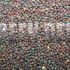 Горчица черная - Brassica nigra (L.) - Семена