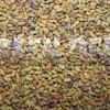 Козлятник восточный (Galega orientalis Lam.) - Семена