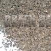 Мятлик луговой (Poa pratensis L.) - Семена