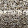 Овсяница красная (Festuca rubra L.) - Семена
