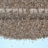 Полевица тонкая, обыкновенная (Agrostis tenuis Sibth.) - Семена