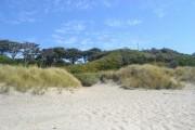 Закрепление песков