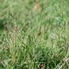 Виды трав названия